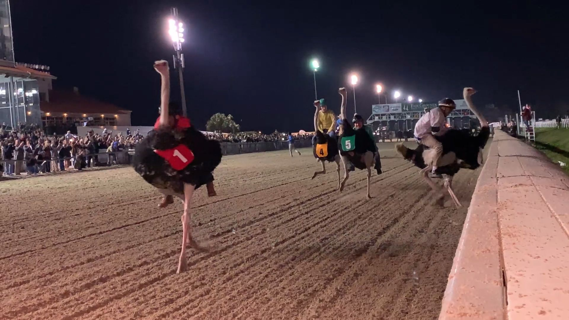 Zebras, camels, ostriches, oh my! Exotic animal racing hits the ...