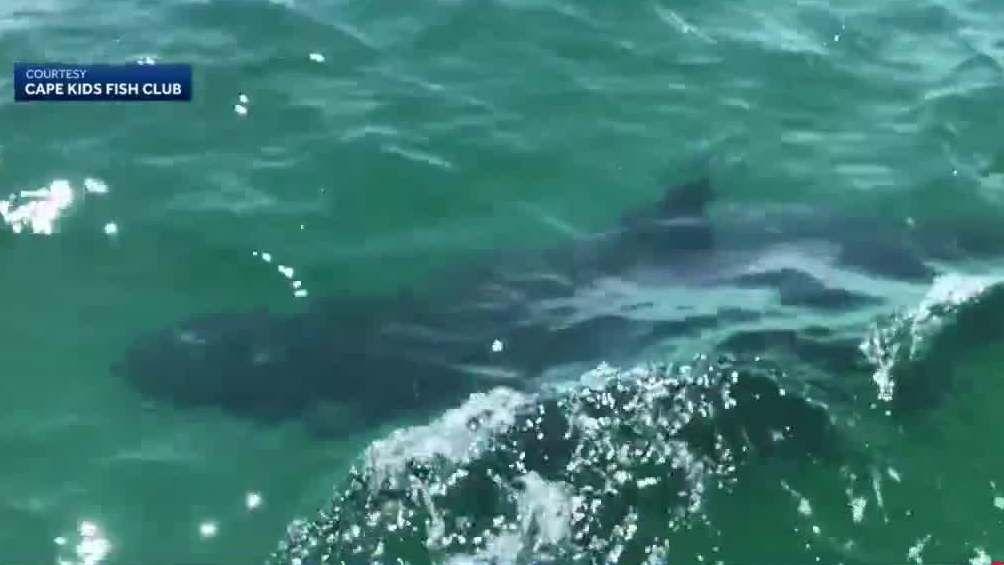 'It's amazing!' Kids exploring Massachusetts coast spot three great white sharks