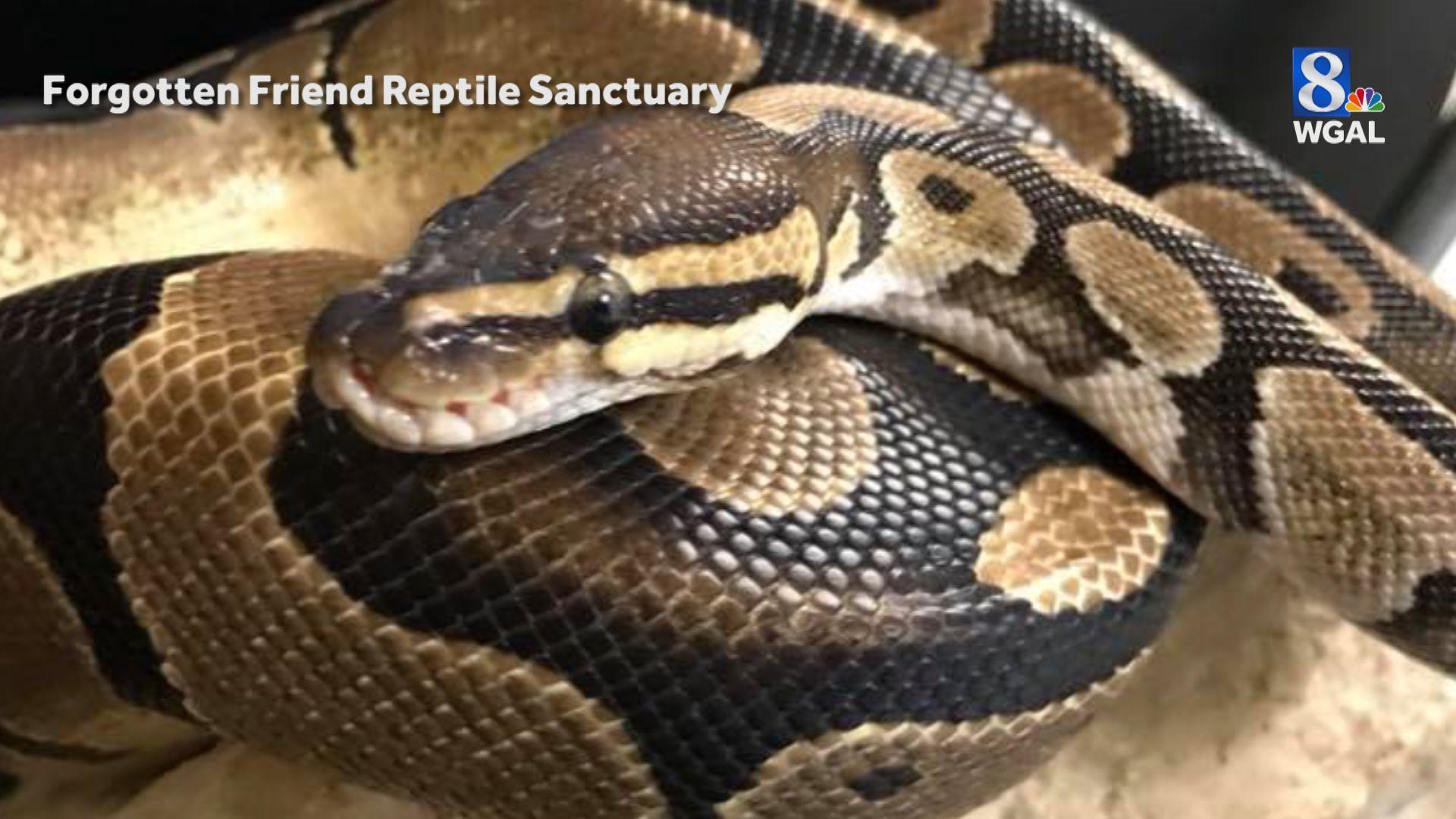 Reptiles By Mack
