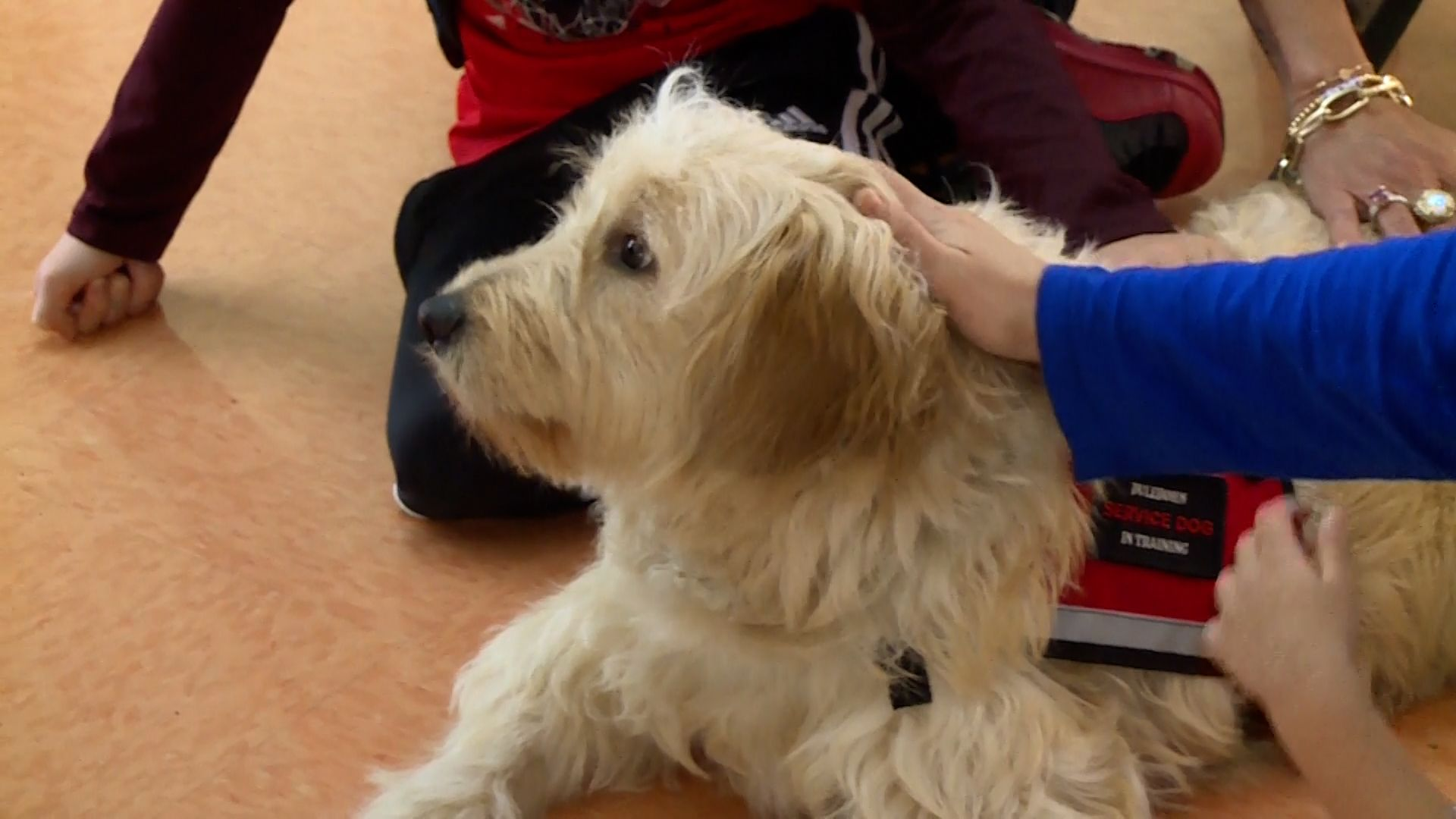 Therapy dog donated to elementary school helps community heal after loss