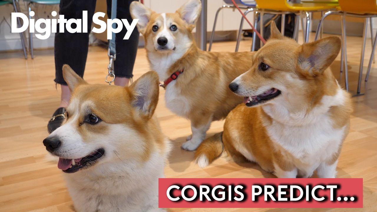 Love Island winners picked by actual corgis