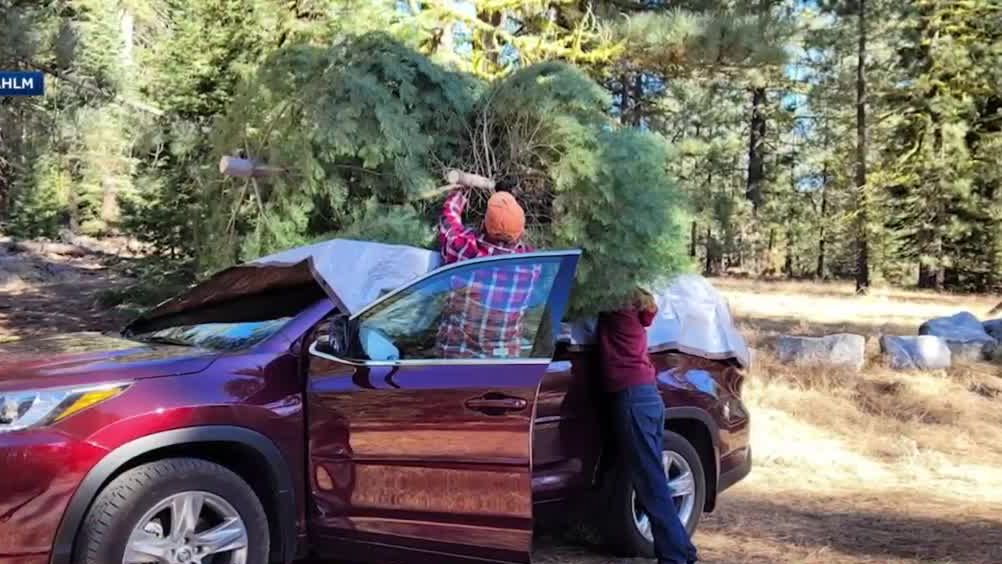 Looking for the perfect Xmas tree? Why not chop it down yourself at the Tahoe National Forest
