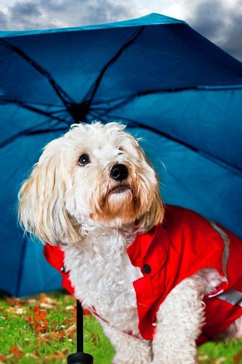 Pet Umbrella-