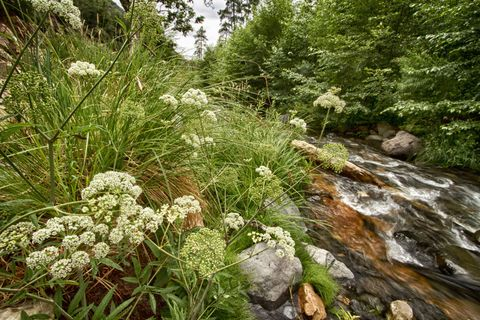 Plant, Flower, Stream, Watercourse, Stream bed, Creek, Arroyo, Riparian zone, Wildflower, River,