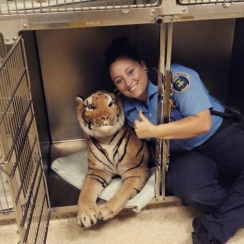 Bengal tiger, Big cats, Felidae, Tiger, Whiskers, Carnivore, Terrestrial animal, Toy, Siberian tiger, Mesh,