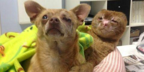 Brown, Yellow, Skin, Vertebrate, Dog breed, Carnivore, Facial expression, Whiskers, Dog, Iris,