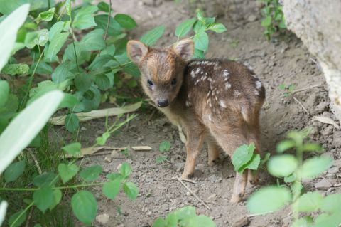 Organism, Leaf, Soil, Terrestrial animal, Adaptation, Marsupial, Groundcover, Snout, Wildlife, Fawn,