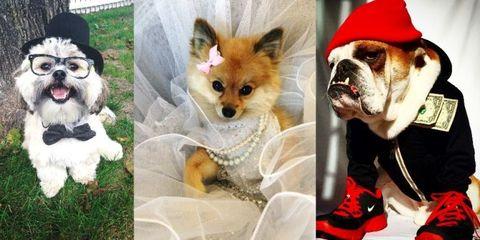 Dog breed, Dog, Carnivore, Vertebrate, Mammal, Snout, Dog supply, Toy dog, Fur, Pet supply,