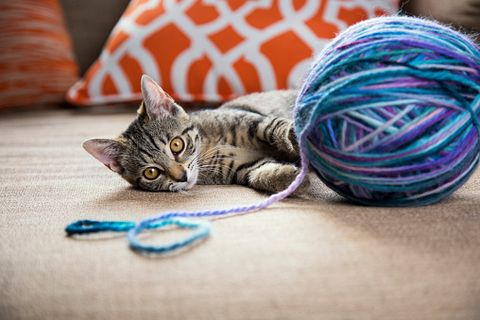 Felidae, Carnivore, Cat, Small to medium-sized cats, Whiskers, Purple, Violet, Cat toy, Domestic short-haired cat, Pillow,