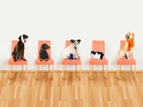 Wood, Dog, Dog breed, Vertebrate, Carnivore, Floor, Hardwood, Flooring, Wood flooring, Laminate flooring,