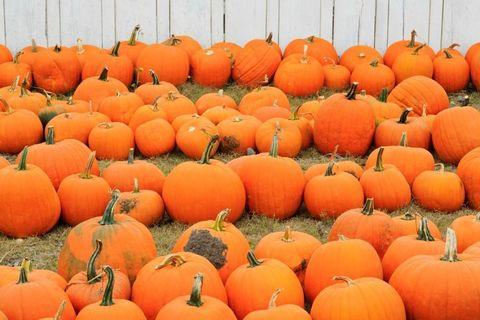 Pumpkin Shortage