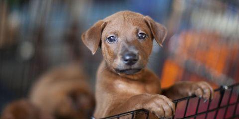 Dog breed, Dog, Carnivore, Dog supply, Pet supply, Cage, Snout, Working animal, Dog crate, Animal shelter,