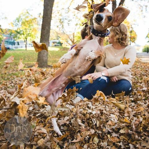 Leaf, Fawn, Autumn, Deciduous, Canidae, Natural material, Working animal, Dog breed, Love,