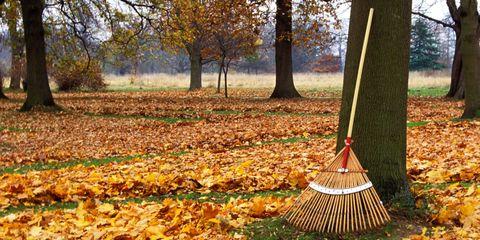 Deciduous, Nature, Leaf, Natural landscape, Autumn, Woody plant, Sunlight, Rake, Shuttlecock, Trunk,