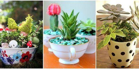 Teacup Plants