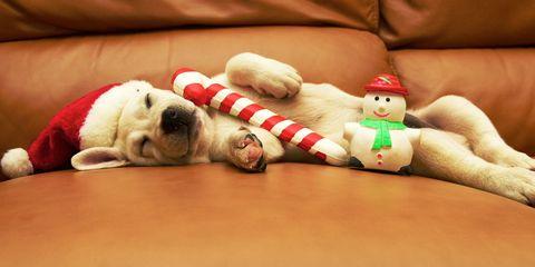 Dog breed, Dog, Carnivore, Stuffed toy, Toy, Fictional character, Plush, Baby toys, Companion dog, Toy dog,
