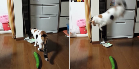 the important reason why everyone needs to stop scaring cats with