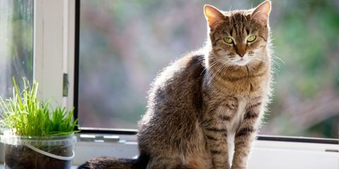 Whiskers, Felidae, Organism, Small to medium-sized cats, Cat, Carnivore, Mammal, Terrestrial animal, Snout, Flowerpot,