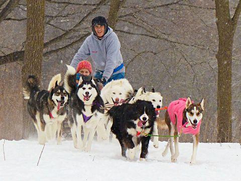 Human, Winter, Dog, Carnivore, Vertebrate, Sled dog, Snow, Mammal, Sporting Group, Dog sled,