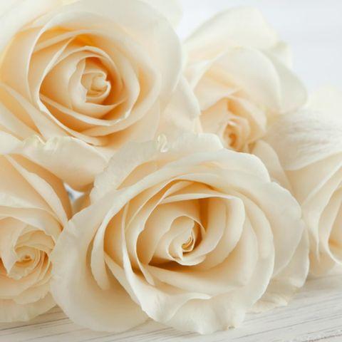 Petal, Yellow, Flower, White, Orange, Flowering plant, Rose family, Garden roses, Peach, Rose order,