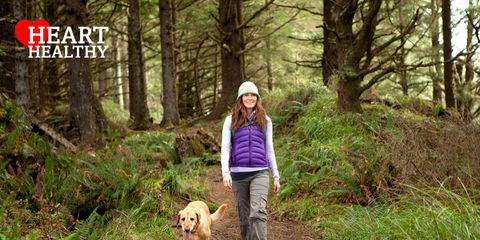 Dog breed, Dog, Carnivore, Mammal, Tree, Forest, Sporting Group, Woodland, Old-growth forest, Adventure,