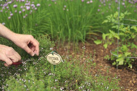 Plant, Soil, Shrub, Groundcover, Agriculture, Subshrub, Flowering plant, Grass family, Garden, Herb,