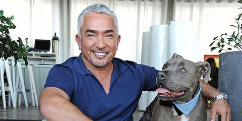 Cesar Millan the dog whisperer's 25 secrets training tips revealed,