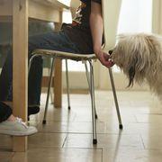 Flooring, Floor, Dog breed, Dog, Carnivore, Comfort, Fur, Wood flooring, Canidae, Laminate flooring,