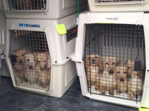 Vertebrate, Dog supply, Carnivore, Pet supply, Cage, Dog crate, Dog, Kennel, Animal shelter, Machine,
