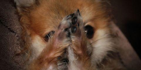 8 Cute Video Clips Of Dogs Praying Dog Prayer