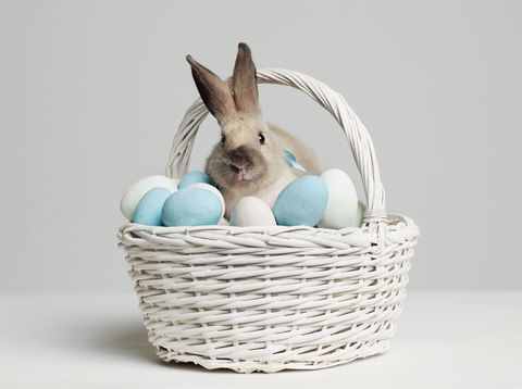 Blue, Basket, Rabbit, Storage basket, Teal, Wicker, Turquoise, Easter, Azure, Rabbits and Hares,