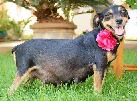 Dog breed, Grass, Skin, Dog, Vertebrate, Carnivore, Mammal, Snout, Collar, Companion dog,