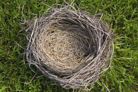 Grass, Straw, Bird nest, Nest, Grass family, Hay, Natural material, Environmental art,