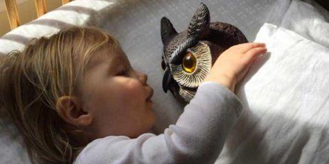 Bird of prey, Wing, Blond, Bird, Brown hair, Baby, Falconiformes, Nap, Gesture, Hair accessory,