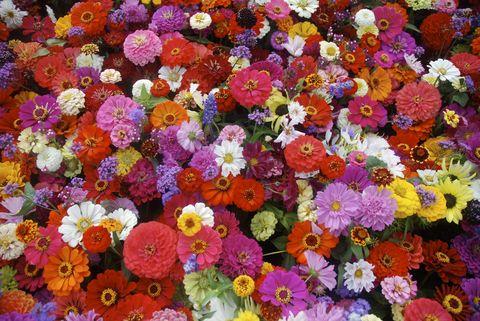 Flower, Petal, Purple, Magenta, Floristry, Orange, Violet, Flowering plant, Annual plant, Daisy family,