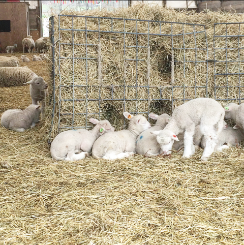 Terrestrial animal, Rabbits and Hares, Domestic rabbit, Rabbit, Wire fencing, Snowshoe hare, Fur, Mesh, Village,