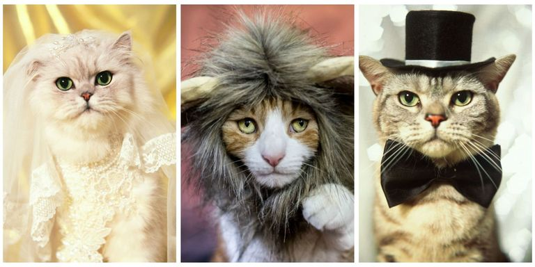 30 Pet Cat Halloween Costumes 2017 - Cute Ideas for Cat Costumes
