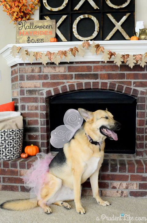 Fairy Dog Halloween Costume