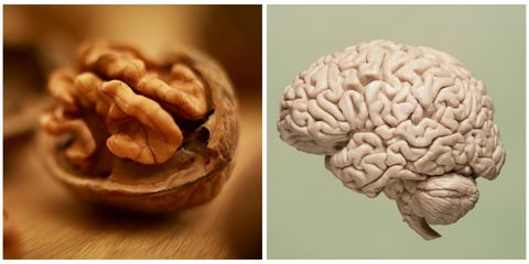 Organ, Brain, Colorfulness, Close-up, Brain, Natural foods, Macro photography, Pezizales, Walnut,