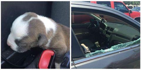 Motor vehicle, Vehicle door, Glass, Automotive mirror, Steering part, Car seat, Steering wheel, Fixture, Windshield, Car seat cover,