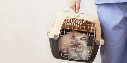 Pet supply, Carnivore, Beige, Cage, Snout, Dog supply,
