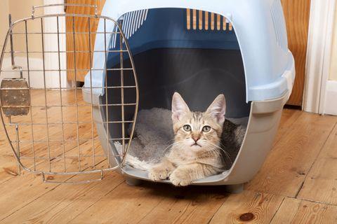Carnivore, Vertebrate, Small to medium-sized cats, Felidae, Whiskers, Pet supply, Cat, Floor, Flooring, Cage,