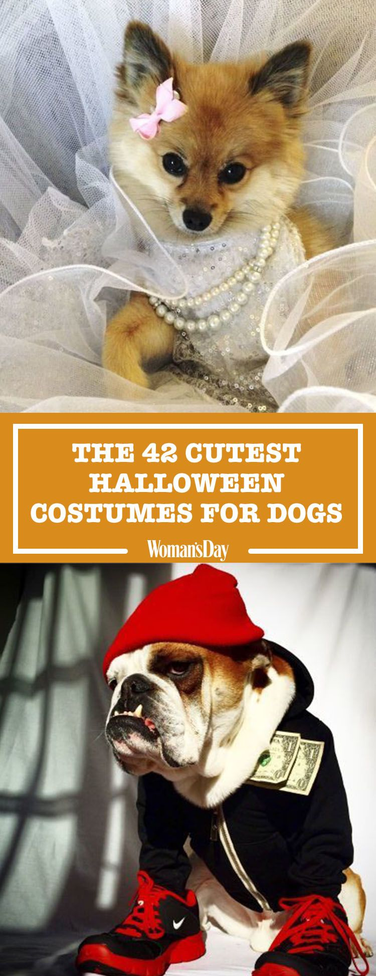 Amazing Fake Throw Ball Adorable Dog - 1470422057-wd-42-dog-halloween-costumes  Best Photo Reference_576063  .jpg