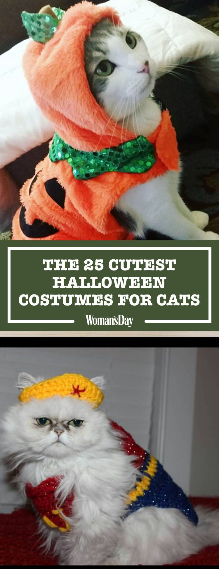 30 Pet Cat Halloween Costumes 2017 - Cute Ideas for Cat Costumes