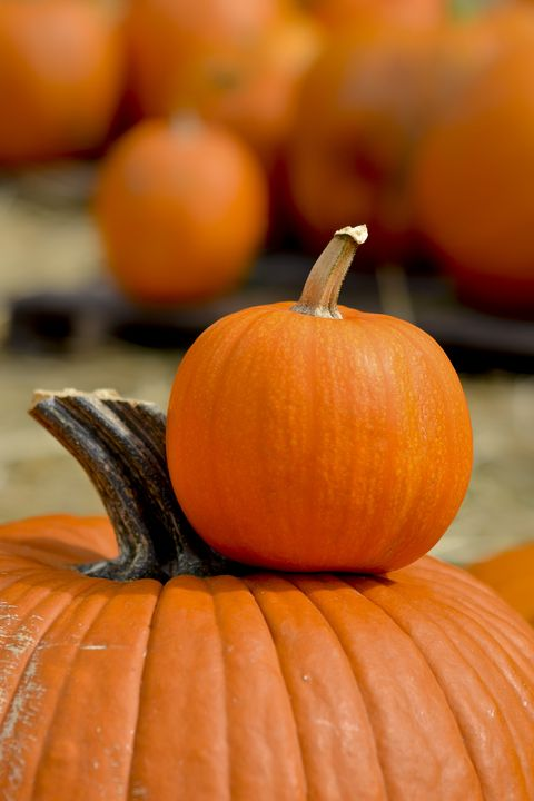 Halloween fun facts - most pumpkins produced by 6 states