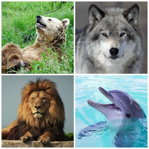 Do You Sleep More Like a Bear, Dolphin, Wolf or Lion?