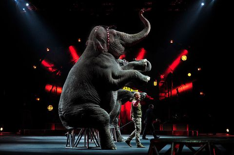 Elephant, Elephants and Mammoths, Performing arts, Performance, Darkness, Indian elephant, African elephant, Performance art, Circus, Stage,
