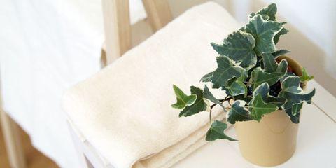 Leaf, Napkin, Annual plant, Flowerpot, Home accessories, Herb, Linens, Plant stem, Herbal,