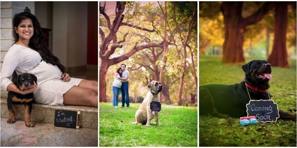 Indian Maternity Photoshoot Ideas | Adorable maternity photo shoot ideas with pets for cute pictures | Cute Pregnancy Photoshoot with Dogs for expecting couples | Function Mania