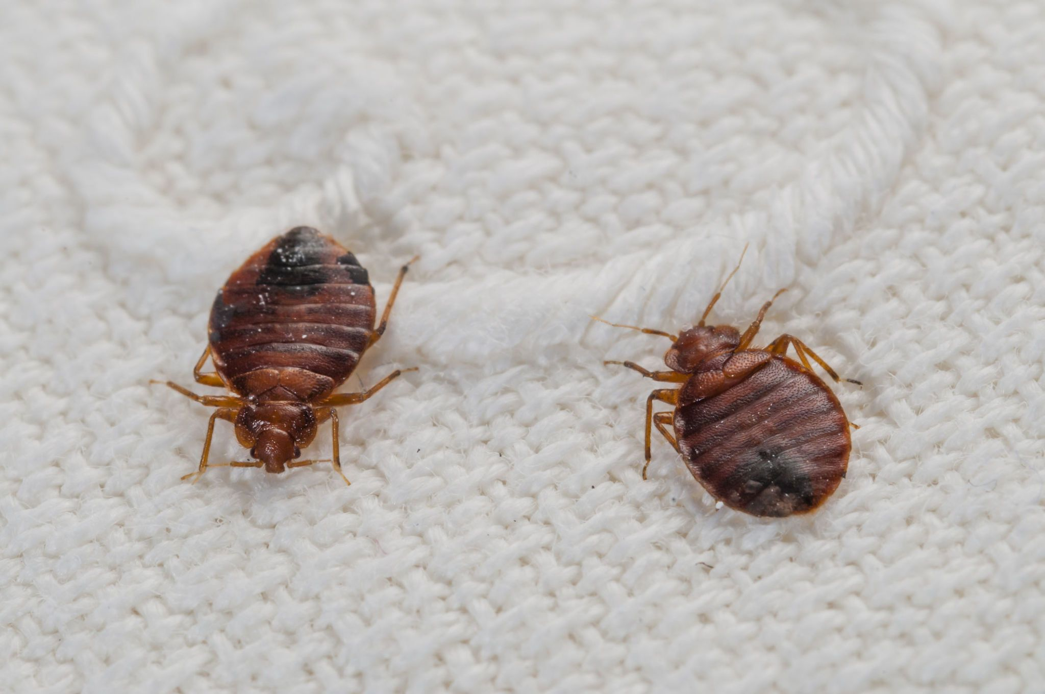 Learn The Surprising Truth About These Pesky Pests.